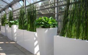 Für Veranstaltungen werden Mietpflanzen oft in weiße Gefäße gestellt.