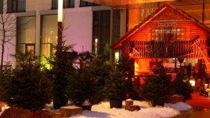 Für Events kannst du bei Gärtnerei Decher einen Weihnachtsbaum mieten.