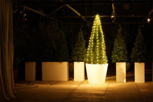 Taxus statt Tanne als Weihnachtsbaum zur Adventszeit und zur Deko