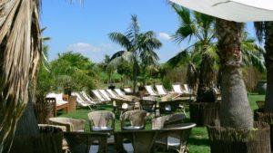 Grünpflanzen & Palmen für Beach Lounge zur Pflanzen Dekoration mieten