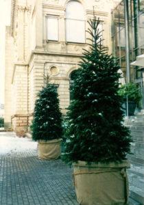 Nordmanntannen aus der Pflanzenvermietung vor dem Restaurant Hölbein.