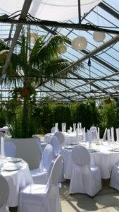 Große Karibik Palme Kentie als deko auf Event in Frankfurt Rhein Main