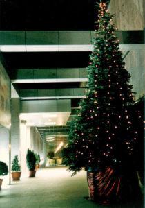 Sie können für ihr Hotel einen großen Weihnachtsbaum mieten.
