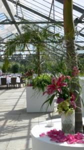 King Palme & Grünpflanze magenta auf Lounge Event indoor in Frankfurt