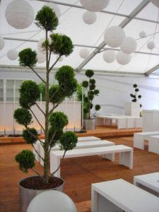 Zelte die man für Veranstaltungen baut, werden durch Mietpflanzen wohnlich.