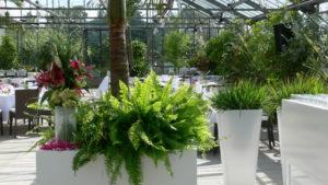 Farn als Deko für Palmen Pflanzen oder Grünpflanzen im Topf zur miete