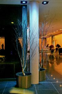 Birken Wald ohne Laub modern für Foyer oder zu Weihnachten mieten