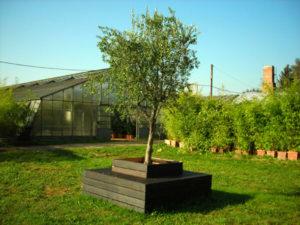 Sie können diese Pflanzen mieten und für Ihre Messe oder ihren Event in ihrer Location platzieren.
