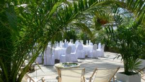Phoenix Palme & Kentia für private Feier oder Event und Messe Stand