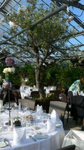 Im Bankettraum gestellt bringt die Mietpflanzen Olivenbaum das mediterane Flair.