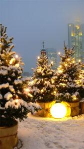 Nahe Frankfurt können Sie für ihr Event einen Weihnachtsbaum mieten.