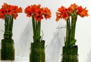 Buffet-Deko mit Mini-Amaryllis und Bambus Halmen zur Advents Zeit