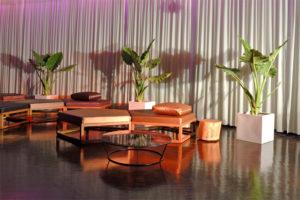 Alocasie im Kubus Pflanzen Topf zur Deko für VIP Lounge in Frankfurt