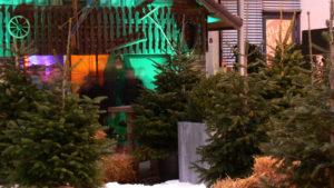 Nordmanntannen für indoor Weihnachts Deko B1 für Events in Frankfurt