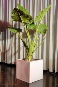 Messe Pflanze mieten für Event Lounge in grüner Atmosphäre