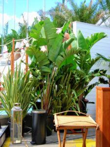 Für Ihre Veranstaltung finden Sie bei uns exotische Mietpflanzen.