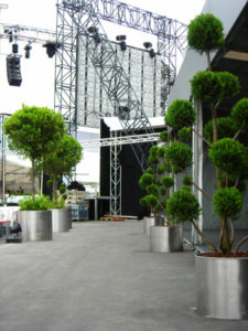 Pflanzen mieten in Edelstahl Metall Übertopf für DTM Event