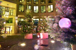 Es lassen sich bei uns unterschiedlich hohe Weihnachtsbäume mieten.