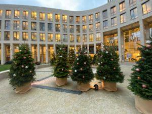 Sie können verschieden hohe Weihnachtsbäume mieten.