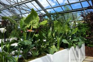 Bepflanzte Raumteiler zum Thema Urban Jungle mieten bei Decher Events