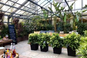 Trendige Blattpflanzen als Raumtrenner / grüne Pflanzenwand mieten