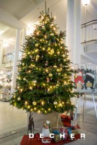 Sie können Pflanzen mieten! Einen Weihnachtsbaum! Die Mietpflanze zur Weihnachtszeit.