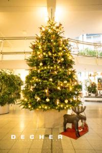Wenn Sie sich einen Weihnachtsbaum mieten, handeln Sie nachhaltig.