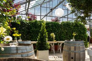 Mieten einer Sichtschutzhecke, echten EfeuPflanzenwand als Begrünung