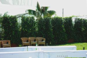 Mit Efeu begrünte Pflanzentrennwand mieten von Gärtnerei Decher Karben
