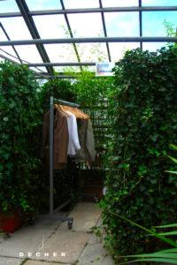 Mieten grüne Trennwand / Efeupflanzen-Stellwand als Raumteiler- Decher