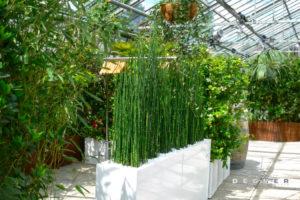 Pflanzen-Stellwand aus Schachtelhalm / Wasserbambus / Equisetum mieten