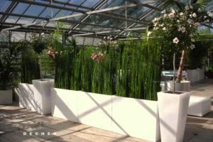 Raumteiler mieten - Equisetum stylisch und modern in weißen Gefäßen
