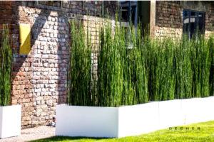 Equisetum / Schachtelhalm mieten als modernen, stylischen Sichtschutz
