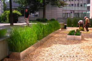 Gräser als Begrünung für öffentliche Plätze mieten v. Decher Frankfurt