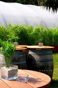 Pflanzen-Raumteiler / Raumtrenner mit dekorativen Gräsern mieten