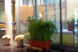Mit echten Pflanzen wie Gräsern u. Schilf begrünten Raumteiler mieten