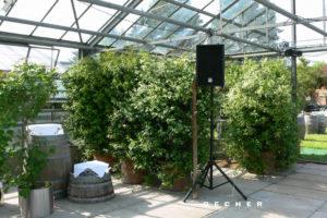Grünpflanzen als Trennwand, Raumteiler u. Sichtschutz mieten | Decher