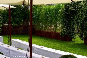 Hohe grüne Trennwand / Hecke aus Schilf mieten - Decher Mietpflanzen