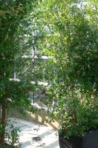 Laubpflanzen als Trennwand u. Sichtschutz - Decher Pflanzen für Events
