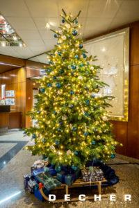 Die weihnachtliche Mietpflanze können Sie mieten! Der Weihnachtsbaum.
