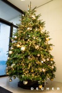 Für ihr Foyer können Sie eine lebenden Weihnachtsbaum mieten.