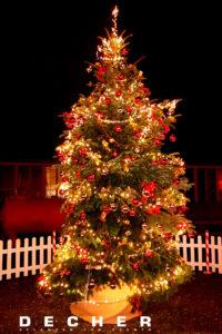 Sie können einen Weihnachtsbaum mieten! Und das 4 Wochen lang!