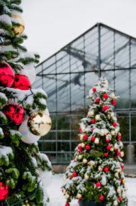Weihnachtsfeier geschützt im Glashaus Karben mit Weihnachtsmarkt