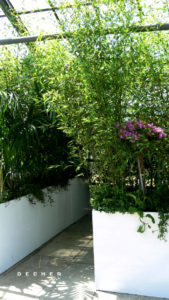 Raumteiler mit Bambus bepflanzt als dekorative grüne Trennwand mieten