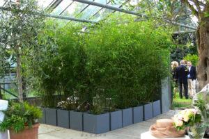 Bambuspflanzen als grüne Trennwand / Raumteiler u. Sichtschutz mieten