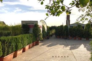 Mieten von Buchsbaum Hecken zur Einfassung / als Pflanzen-Trennwand