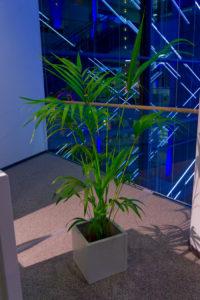 Für Business Events sind Palmen im Kubus wunderbare Mietpflanzen.