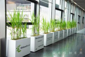 Mietgefäße / Raumteiler mit Ihrer Werbebotschaft - Mietpflanzen Decher