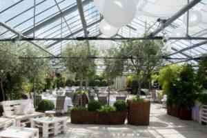 Olivenbäume & Buchsbaum als Raumteiler mieten von Decher Mietpflanzen