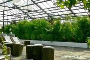 Mit Palmen und Bambus bepflanzte Raumteiler von Decher Mietpflanzen